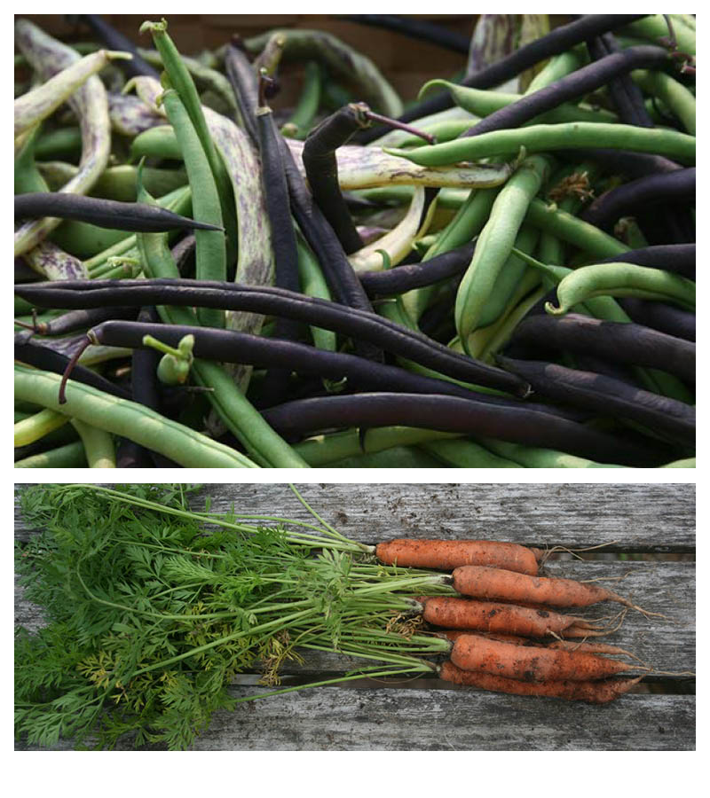 beans-and-carrots.jpg