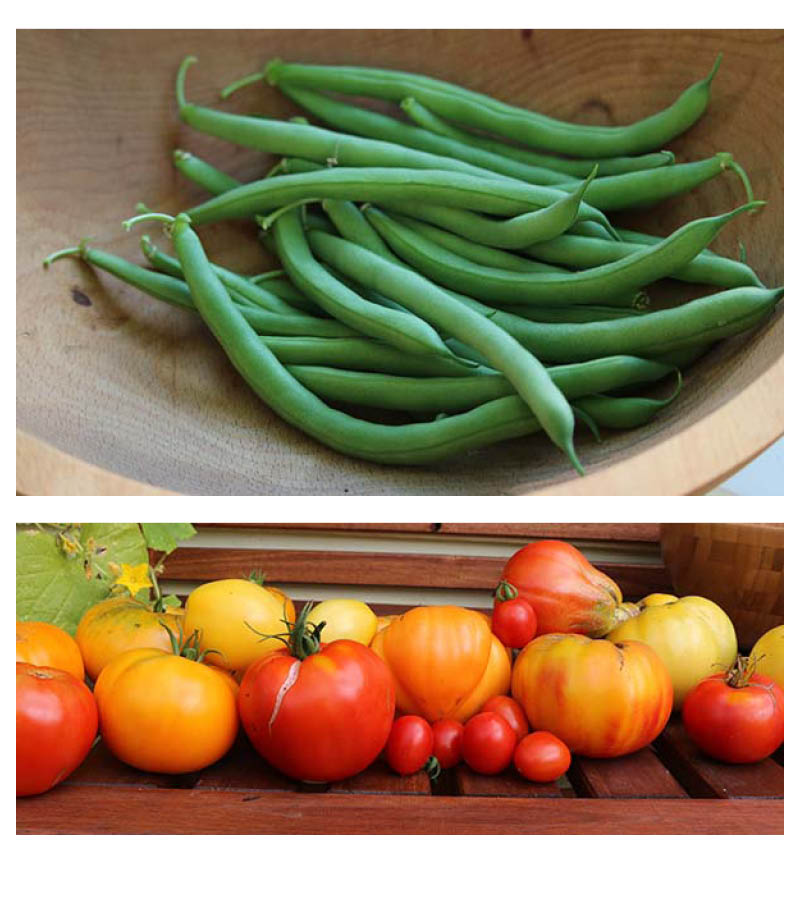 beans-and-tomatoes-3.jpg