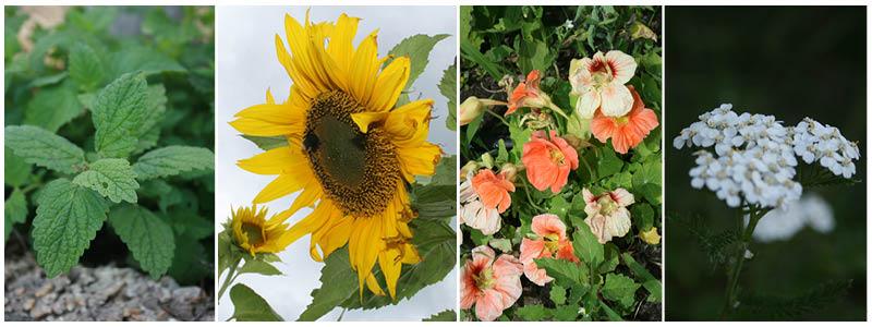 combo-flowers-and-herbs.jpg