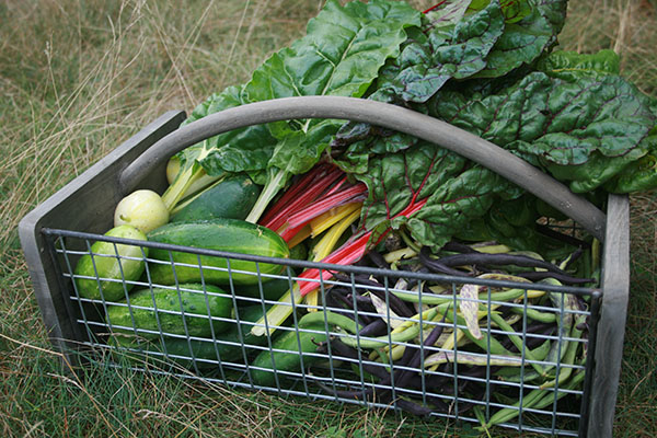 veggie-basket-11-small.jpg