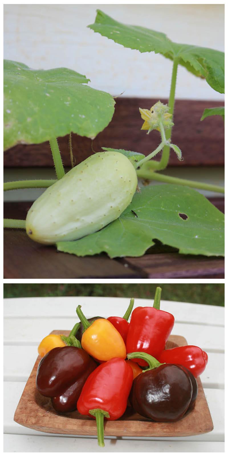 cucumber-and-pepper.jpg