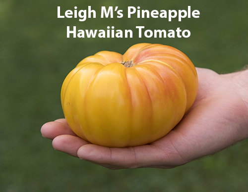 from-leigh-airleighlegal-yahoo.com-id-178-10-pineapplehawaii.jpg