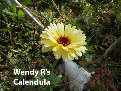 from-wendy-rafalski-wminear27-yahoo.com-id-187-5-calendula.jpg