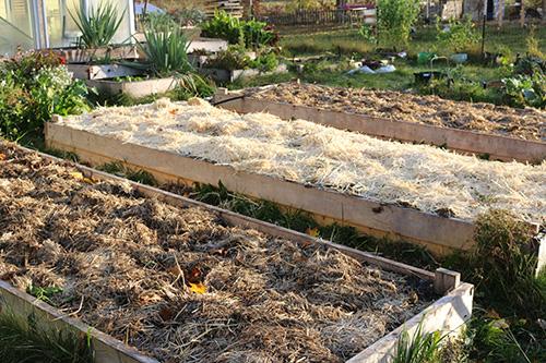 garlic-beds-small.jpg