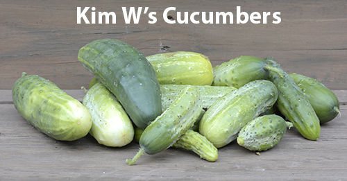 marketmore-76-cucumber-and-homemade-pickles-cucumber-kim-wasielewski.jpg