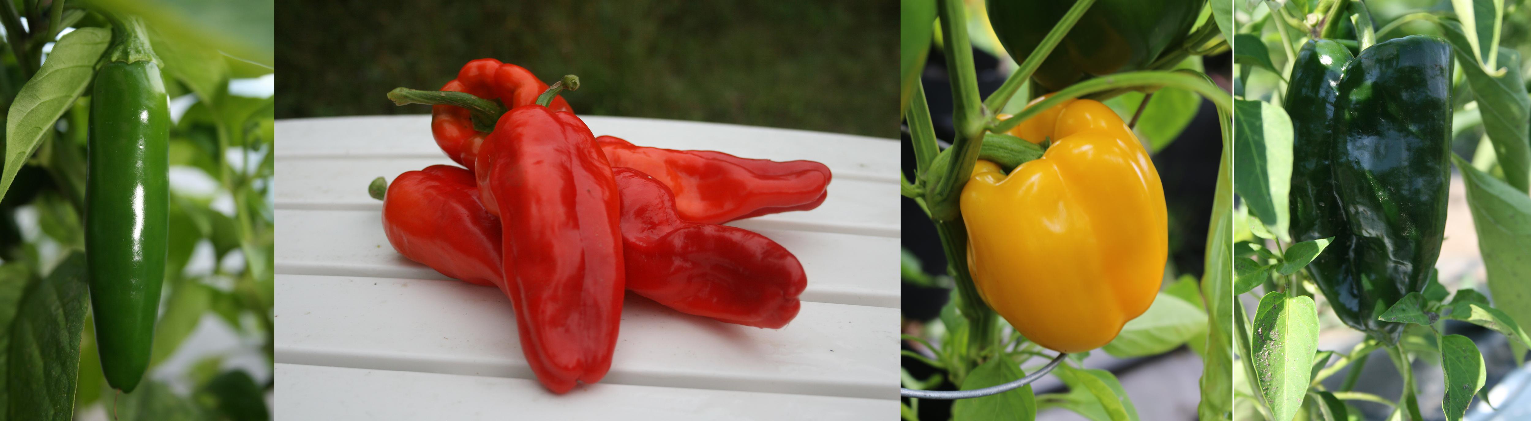 pepper-banner.jpg