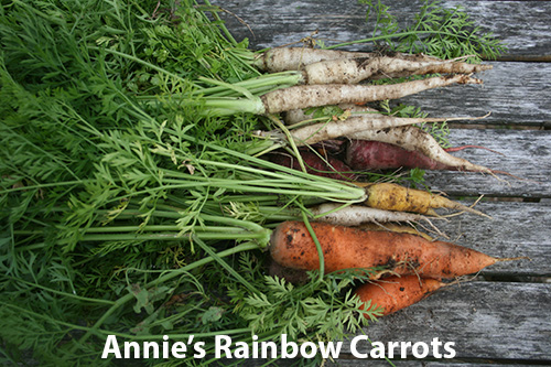 rainbow-carrots.jpg