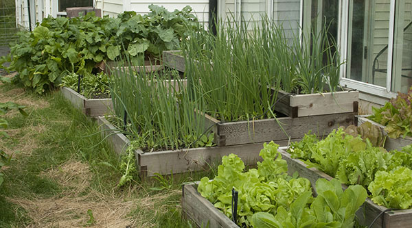 raised-beds-2-small.jpg