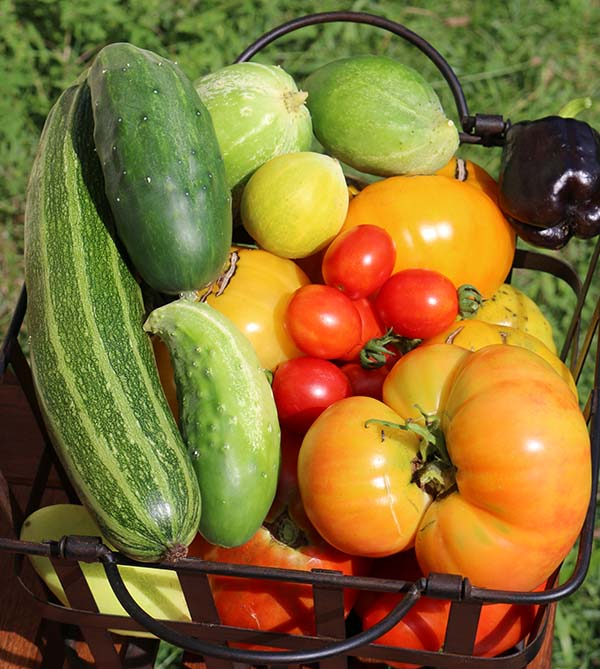 veggie-basket-5-small.jpg